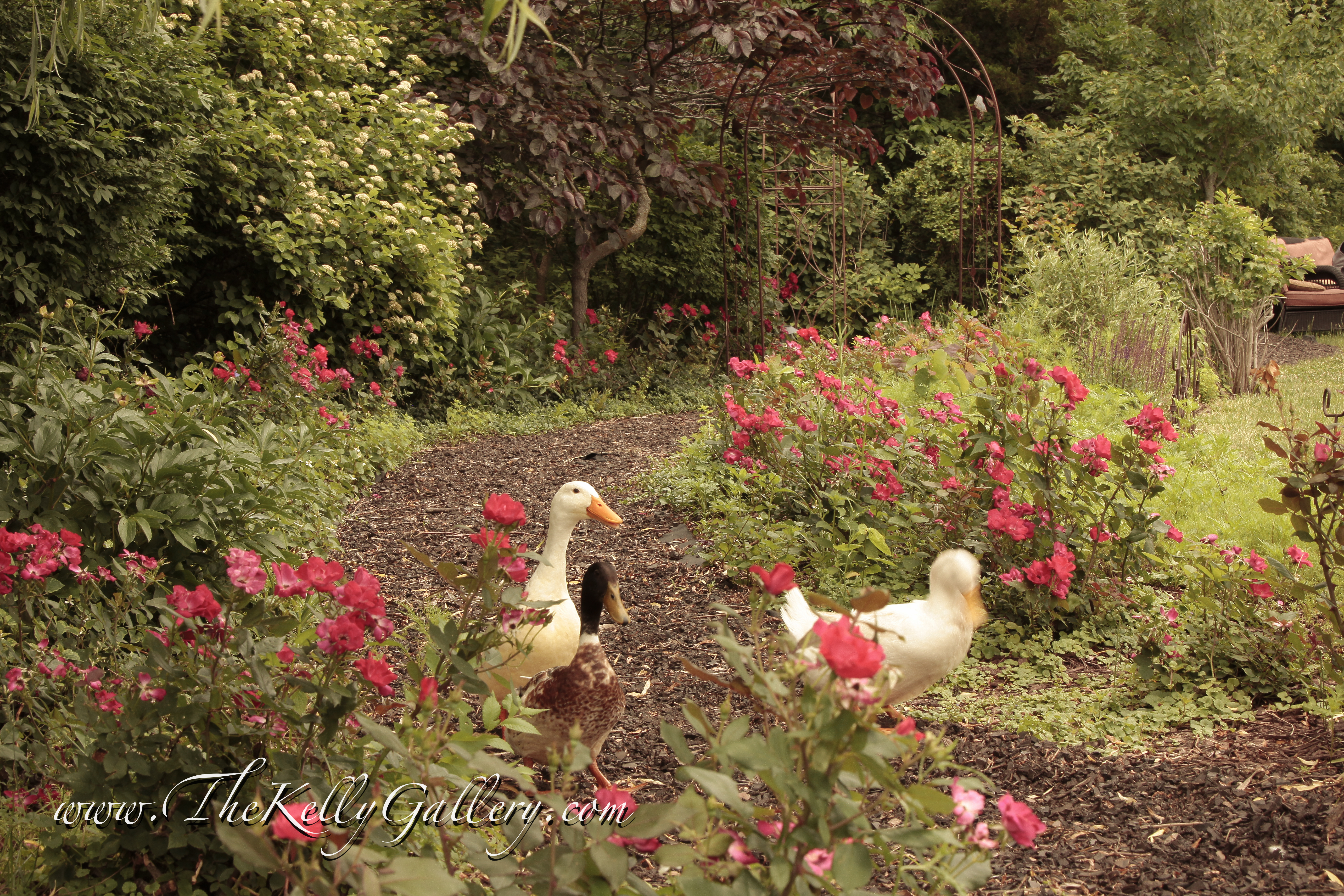 Gallery – The Gardens at The Kelly Gallery